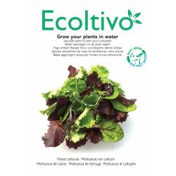 Gemixte sla (Grow your plants in water with Ecoltivo)