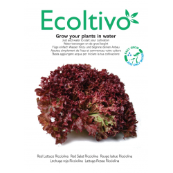 Rode sla (Grow your plants in water with Ecoltivo)